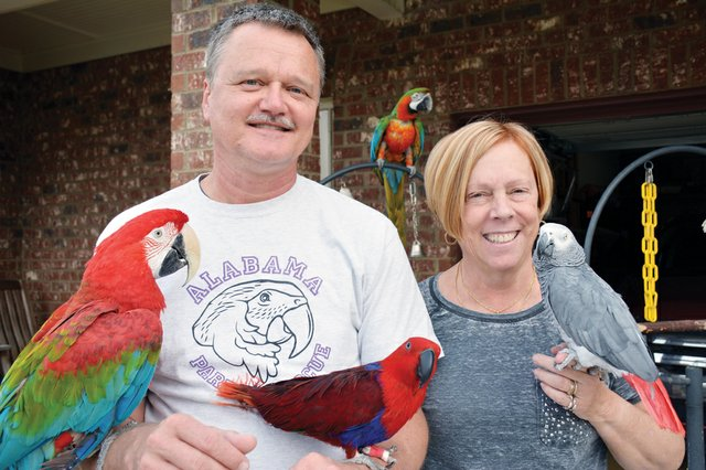SUN FEAT Parrot Rescue1.jpg