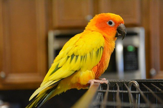 SUN FEAT Parrot Rescue6.jpg