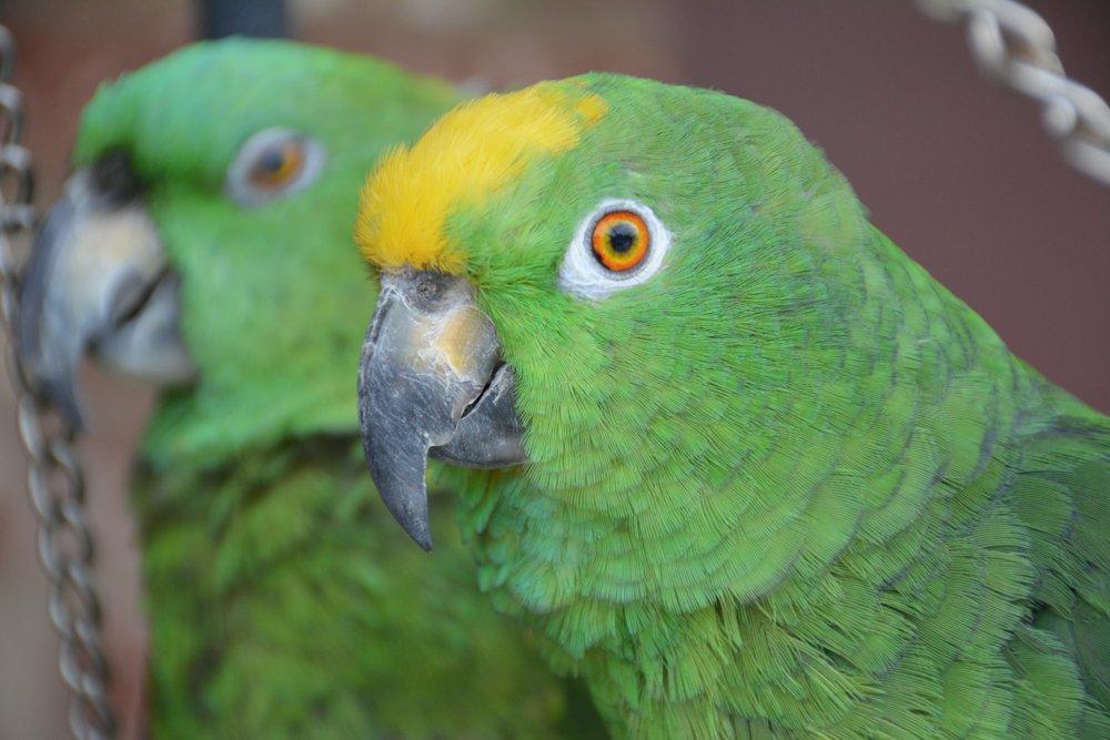Parrot paradise - HooverSun com