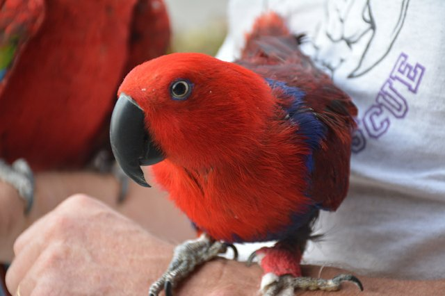 SUN FEAT Parrot Rescue6e.jpg