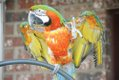 SUN FEAT Parrot Rescue7.jpg