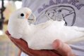 SUN FEAT Parrot Rescue8.jpg