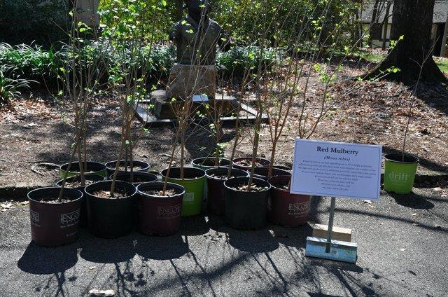 Arbor Day 2017-6