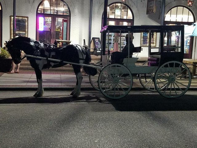 Carriage rides at the Preserve
