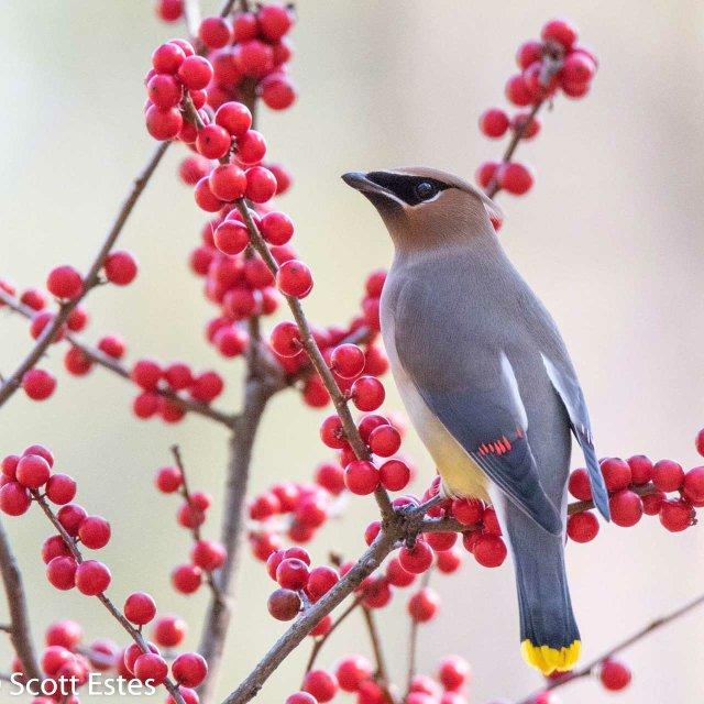 SUN-EVENTS-Aldridge-Gardens-bird-walks_IMG_2774.jpg