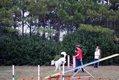 HV EVENTS dog days9.jpg