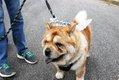 HV EVENTS dog days14.jpg