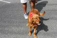HV EVENTS dog days18.jpg
