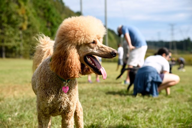 RECREATION-Dog-Parks-9.jpg