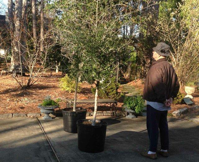 0313 Toomer's Seedlings