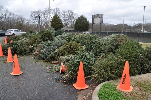 Christmas tree recycling 12-31-18 (3)