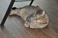 200504_Kitty_Kat_Haven_JMA