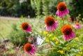 Riverchase Elementary celebrates garden growth