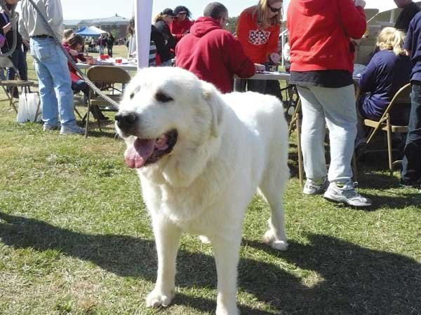 WOOFstock-white-dog.jpg