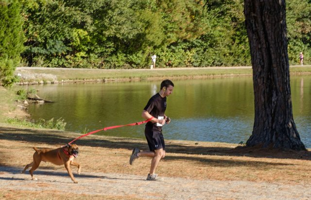 Paws for the Cause 2016 - 15 (1).jpg